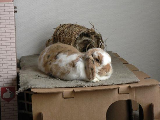 La cabane du lapin la dure vie du lapin urbain for Cabane pour lapin exterieur