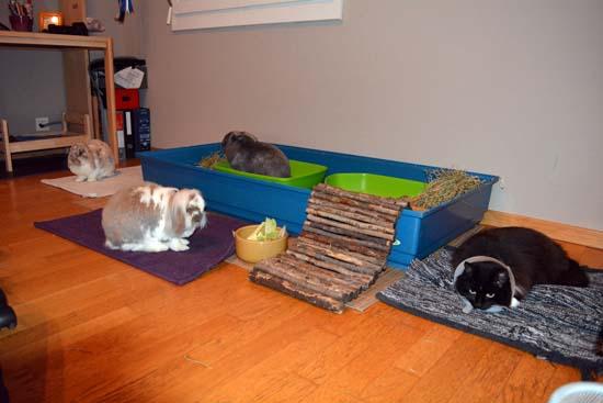 habitat du lapin de compagnie la cage marguerite et cie. Black Bedroom Furniture Sets. Home Design Ideas