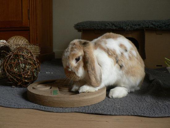 La journ e type du lapin la dure vie du lapin urbain - Jeux pour lapin a fabriquer ...