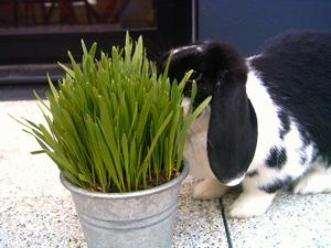 liste des l gumes pour lapins la dure vie du lapin urbain. Black Bedroom Furniture Sets. Home Design Ideas