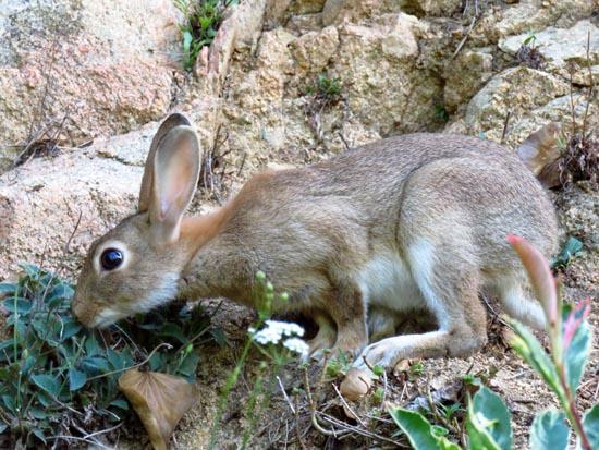 comment respire le lapin
