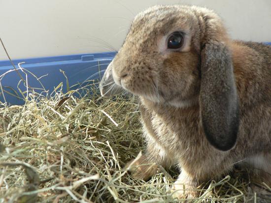 Sols et rev tements adapt s aux lapins la dure vie du lapin urbain - Acheter de la paille pour jardin ...