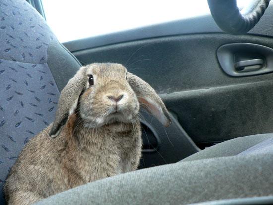 partir en vacances avec un lapin